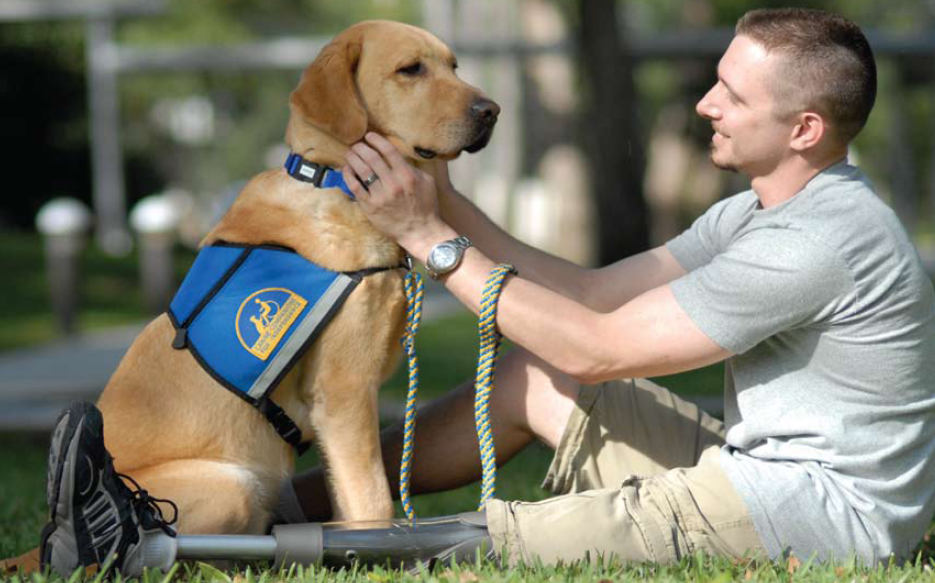 Veteran with prosthetic leg patting labrador with blue harness